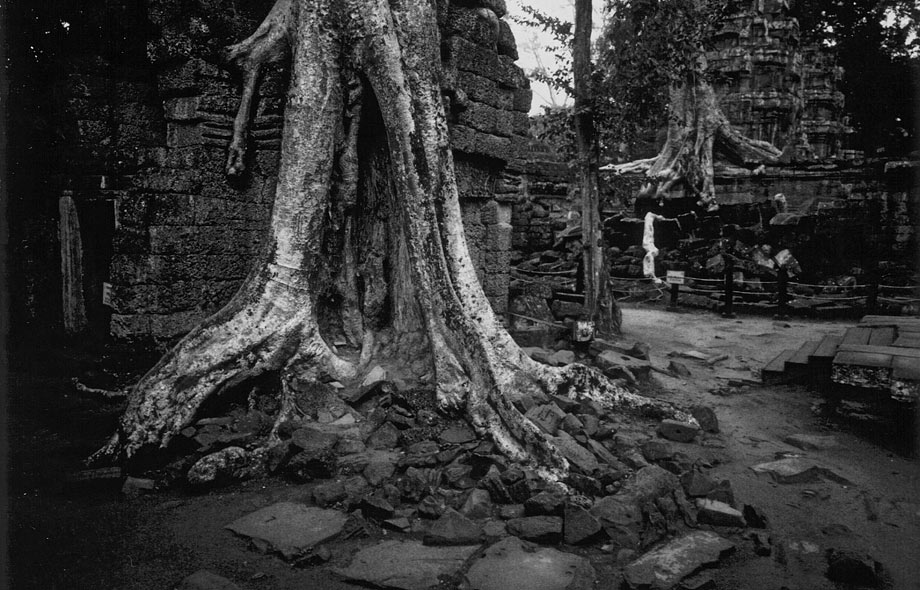Angkor Cambodia, trees grown together with temple Ta Prohm © Fredrik von Erichsen
